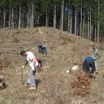 Да възстановим гората!