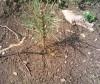 Снимки от залесяването на гората в Сливница (след 3 месеца)