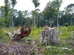 Сеч на дърва