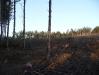 2009.11.24-slivnitsa-durin-dol-zalesqvane-01