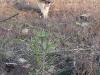 2009.11.24-slivnitsa-durin-dol-zalesqvane-10