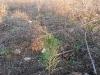 2009.11.24-slivnitsa-durin-dol-zalesqvane-11