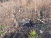 2009.11.24-slivnitsa-durin-dol-zalesqvane-13