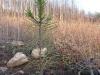 2009.11.24-slivnitsa-durin-dol-zalesqvane-18