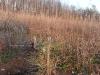 2009.11.24-slivnitsa-durin-dol-zalesqvane-23
