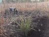 2009.11.24-slivnitsa-durin-dol-zalesqvane-24