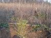 2009.11.24-slivnitsa-durin-dol-zalesqvane-25