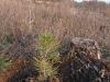 2009.11.24-slivnitsa-durin-dol-zalesqvane-26