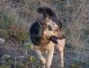 2009.11.24-slivnitsa-durin-dol-zalesqvane-29