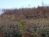 2009.11.24-slivnitsa-durin-dol-zalesqvane-31