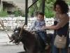 praznik-na-grad-slivnitsa-2012-01